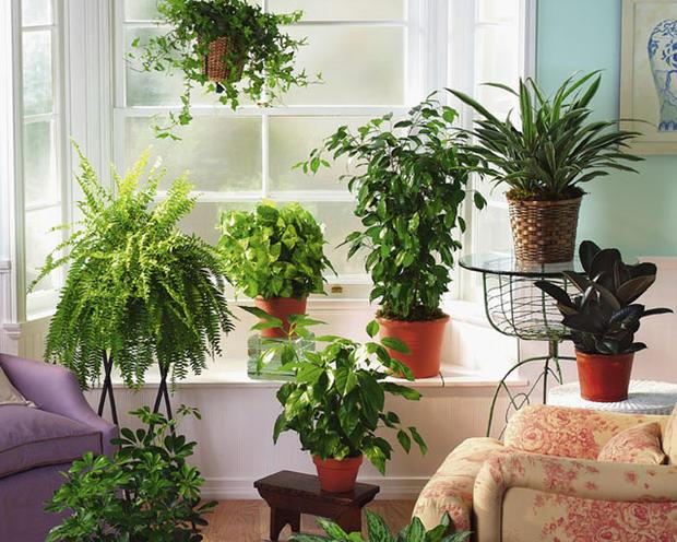 растения для дома кислород